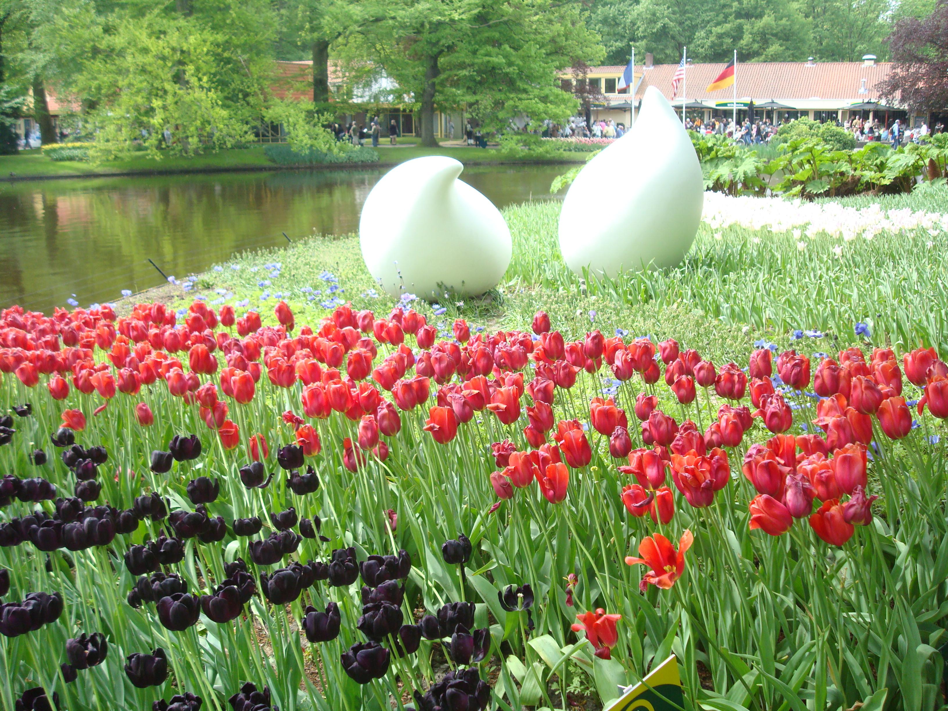 Tulips At Keukenhof Gardens In Amsterdam